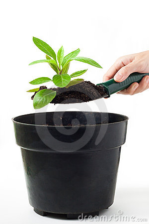 Planting Herb