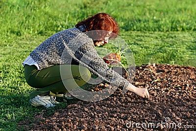 Planting onion