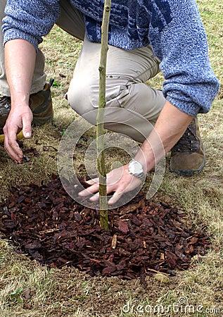 Free Planting Sapling Tree Stock Photography - 10235282