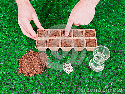 Planting Seeds with Hands