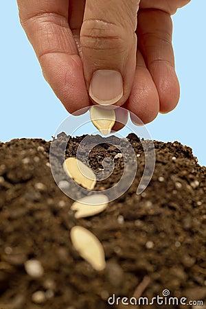 Planting Seeds XXXL