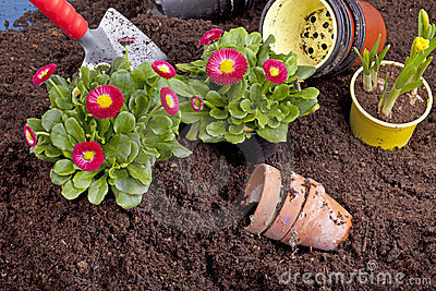 Planting spring flowers