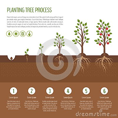Free Planting Tree Process Infographic. Apple Tree Growth Stages. Ste Stock Photo - 110496320