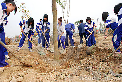 Planting trees Editorial Stock Image