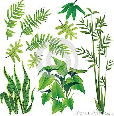 Free Plants Stock Photo - 35830050