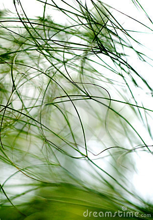 Free Plants Abstract Royalty Free Stock Images - 2066769