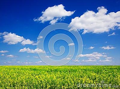 Plants for biofuel