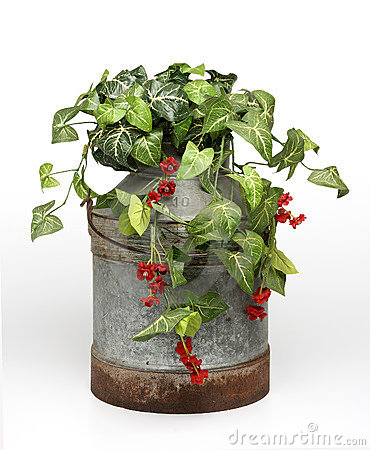 Plants on bucket