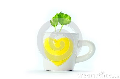Plants in cup of heart with white background.
