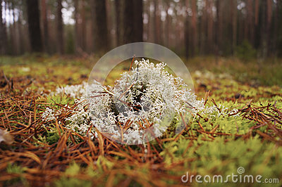 Plants in forest autumn