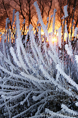 Plants frost sunset