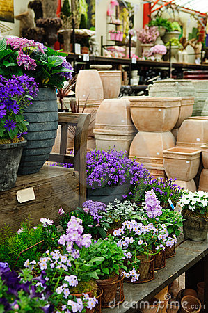 Plants in garden center