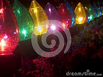 Plants in garish Christmas lighting