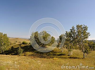 Plants in grassland