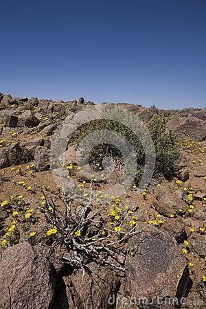 Free Plants Growing In The Richtersveld, South Africa. Royalty Free Stock Image - 25864656