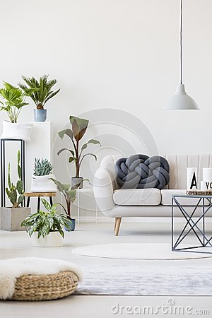 Free Plants In Living Room Royalty Free Stock Photo - 111717145