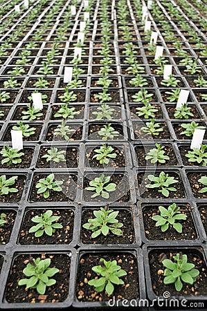Plants Inside Greenhouse Nursery