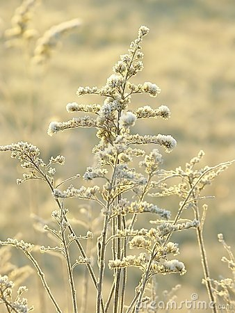 Plants on a meadow at winter sunrise