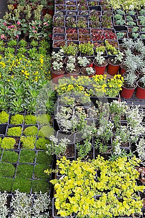 Plants Nursery Stock Image - Image: 26242671