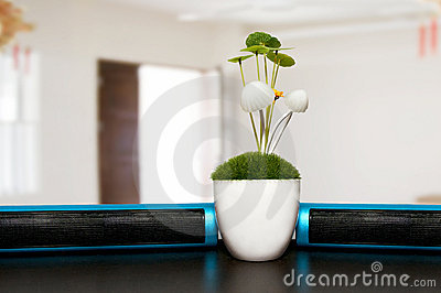 Plants on office desk