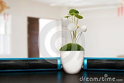 Plants on office desk
