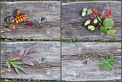 Plants on an old wooden board