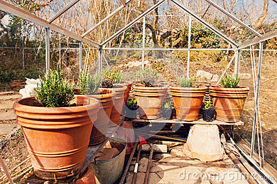 Plants on pots in glasshouse