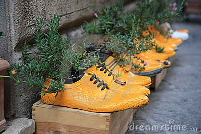 Plants potted in yellow shoes