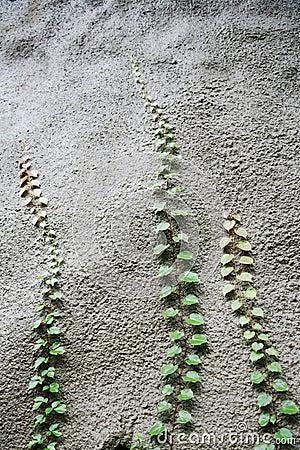 Plants reaching upwards