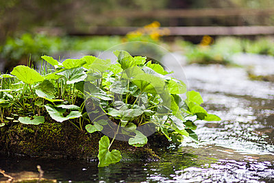 Plants on the river