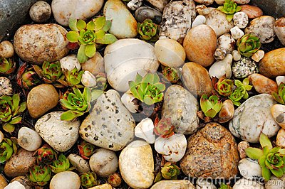 Plants among the shingle
