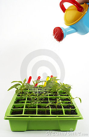 Plants with watering can
