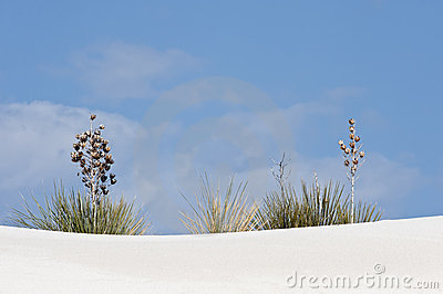 Plants on white sand