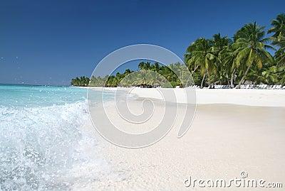 Plażowego karaibskiego oceanu palmowi piaska saona drzewa
