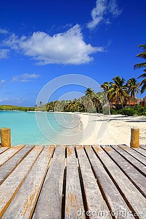 Plażowy karaibski contoy wyspy Mexico palmy treesl
