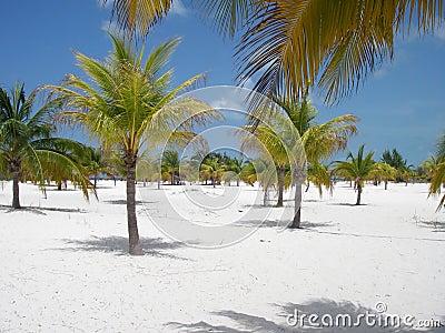 Plażowy lasowy palmowy raj