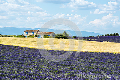 Plateau de Valensole (Provence), house and lavender fields