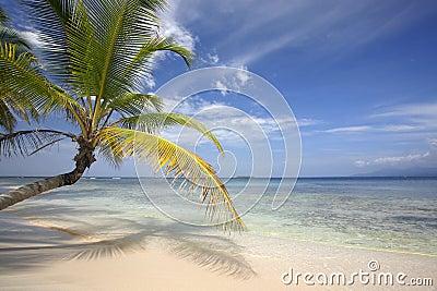Playa del paraíso con la palma de coco