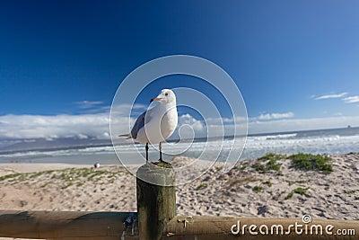 Playa del pájaro de la gaviota