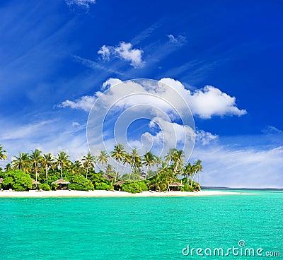 Playa tropical con las palmeras