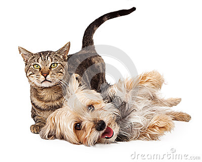 Playful Dog and Cat Laying Together