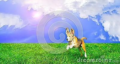 Playful dog jumping