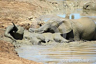 Playful elephants