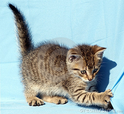 Free Playful Kitten Stock Photo - 13712950