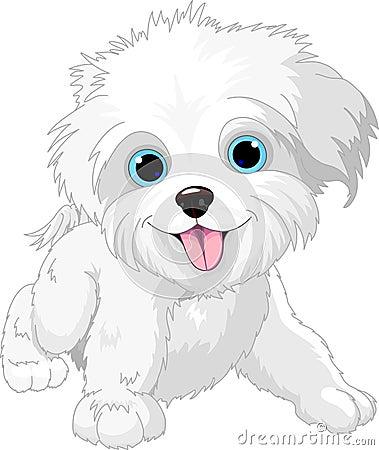 Free Playful Lap-dog Royalty Free Stock Photography - 25427807