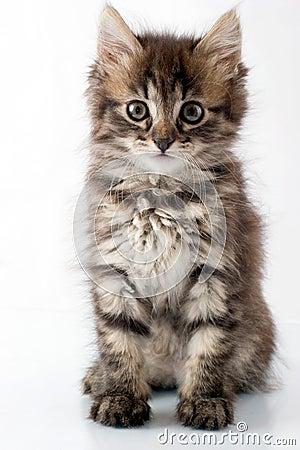 Playful little kitty