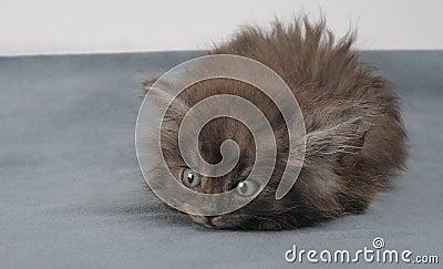 Playful small kitty