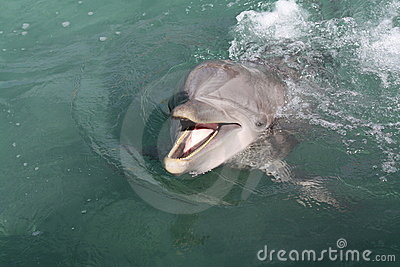 Playfull Dolphin