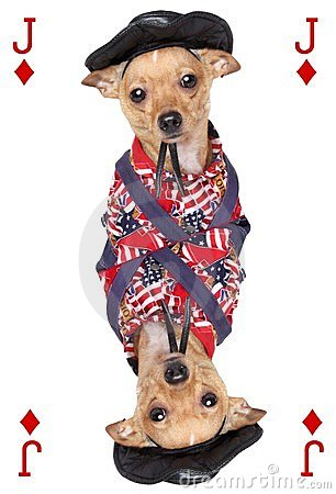 Playing card with chihuahua dog