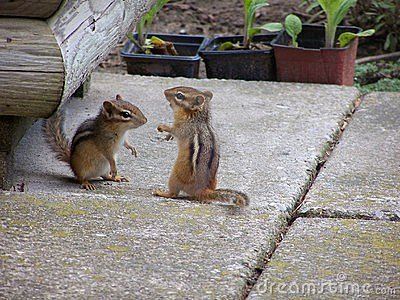 Playing Chipmunks
